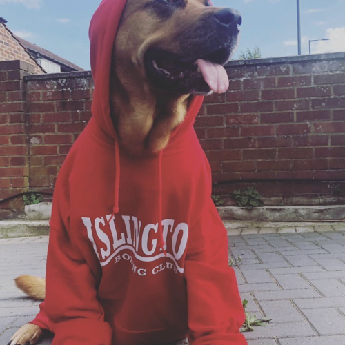 Dog's can have IBC Hoodies as well!