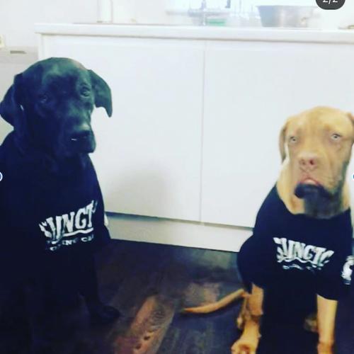 Dog's in IBC
